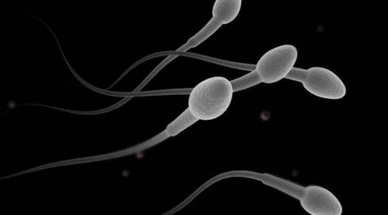 How Stress Decrease Male Sperm Fertility